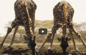 Unwind By The Waterhole – Waterhole: Africa's Animal Oasis